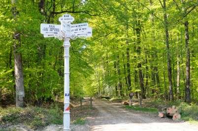 SARTHE - Forêt de Bercé