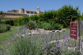ALPES DE HAUTE PROVENCE Prieuré de Salagon Au jardin des Senteurs