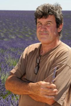 ALPES DE HAUTE PROVENCE Champs de lavande vers Valensole Richard Grudia, producteur de lavandin