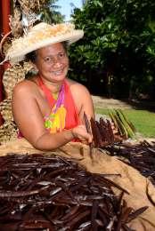 Polynésie Française Tahaa A la Vallée de la Vanille, Moeata présente des gousses vertes en cours de mûrissement, et des gousses mûres en cours de séchage
