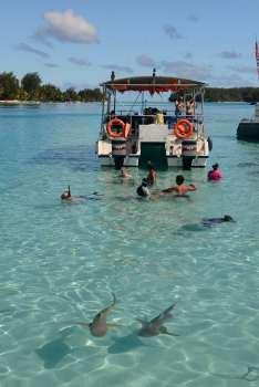 Polynésie Française Moorea Spot touristique dans le lagon (nord de Moorea) où sont presque apprivoisés raies et requins à pointes noires