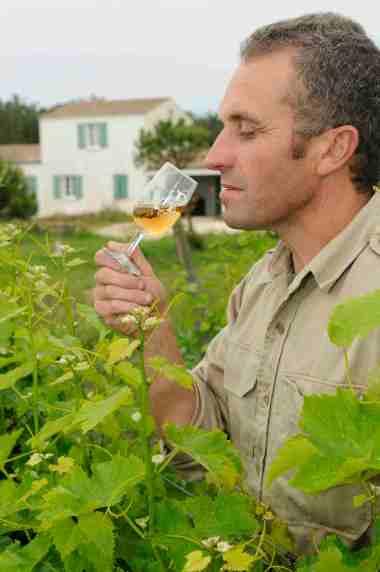 Pineau des Charentes SCEA Favre & Fils, à St-Pierre d'Oléron (Charente Maritime) Pascal Favre apprécie un verre de pineau dans ses vignes