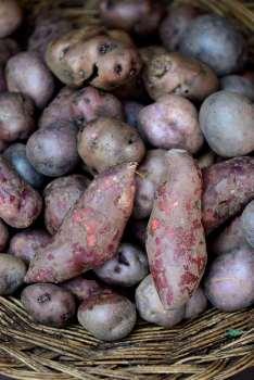 PEROU Village de Umasbamba, vers Chinchero Pommes de terre et patates douces