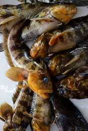 PEROU - Lima Au marché aux poissons de Chorrillos