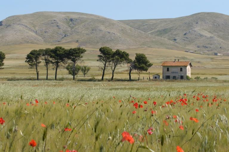 ITALIE - Pouille Paysage vers Gravina