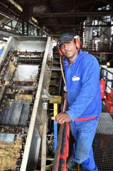 GUADELOUPE - Le Moule Distillerie Damoiseau Un ouvrier contôle le broyage de la canne