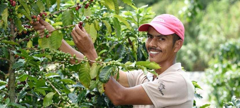 La Colombie, c'est fort decafé