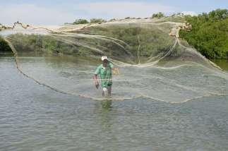 COLOMBIE - Carthagène Un pêcheur d'Ecotours lance son carrelet dans la mangrove