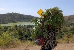 MAYOTTE Petite Terre Cratère Dziani Garçons portant des feuilles pour nourrir le bétail