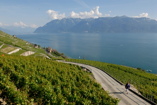 SUISSE Les terrasses de Lavaud Balade dans les vignes vers Epesses