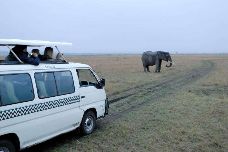 KENYA Maasaï Mara Eléphants