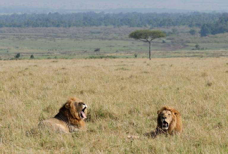Combiné safaribalnéaire