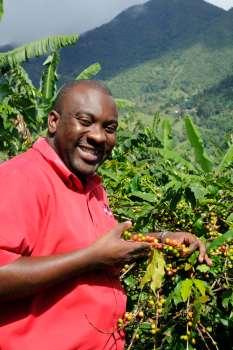 JAMAÏQUE Plantation de café à Strawberry Hills, dans les Blue Mountains Alton Bedward, guide spécialisé dans le café, montre des grains d'Arabica