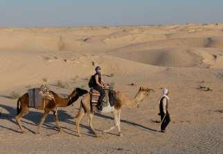 TUNISIE Désert à quelques km de Douz Cheminement de la méharée