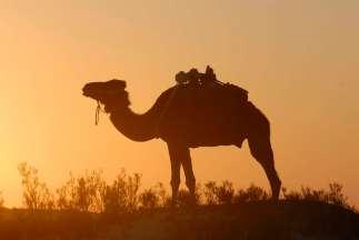 TUNISIE Désert à quelques km de Douz