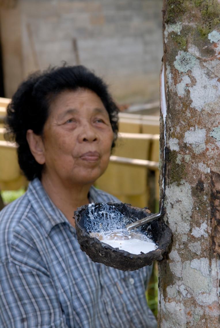 THAÏLANDE Récolte et fabrique de caoutchouc avec la résine d'hévéa