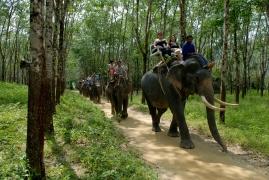 THAÏLANDE Khao Lak Elephant Camp vers Pakwep