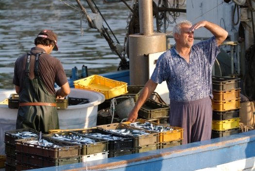 CROATIE Ile de Korcula Pêcheurs de sardines au port de Vela Luka