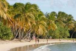 MARTINIQUE Ste-Anne Plage de la Grande Anse des Salines
