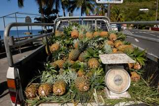 MARTINIQUE Ananas au Carbet