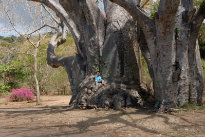 MAYOTTE Bambo Est Baobabs géants à Musicale Plage