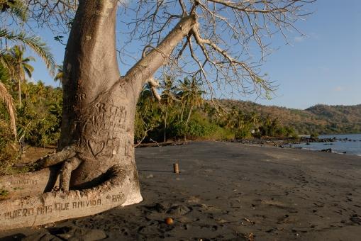 MAYOTTE Plage de sable noir et baobab de Mbouanatsa