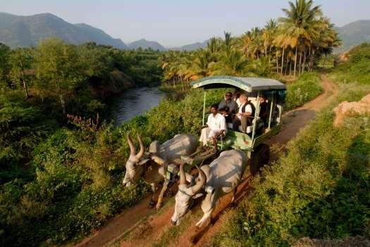 INDE du SUD Kerala Vers Periyar Promenade en char à boeufs organisée par le Spice Village, au profit d'anciens voleurs réhabilités.