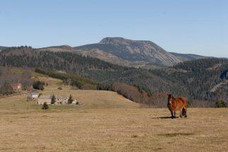 ARDECHE Haut plateau vers le Mont Mézenc
