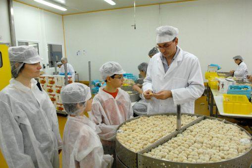 ARDECHE Fabrication des marrons glacés chez Sabaton, à Aubenas