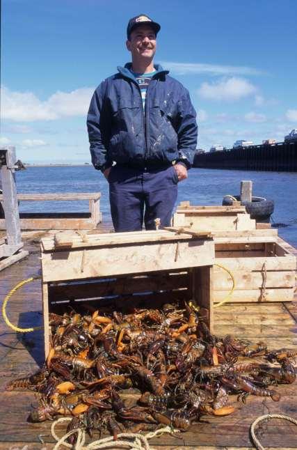 CANADA Nouveau-Brunswick Pêcheur de homards à Shippagan