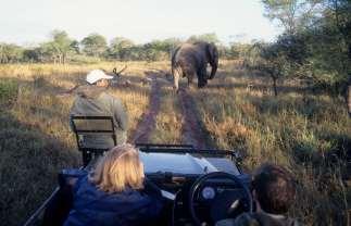 AFRIQUE du SUD Game drive dans la réserve de Sabie Sand