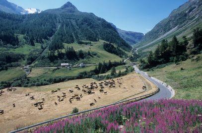 ITALIE - Val d'Aoste Valgrisenche, vers Surrier