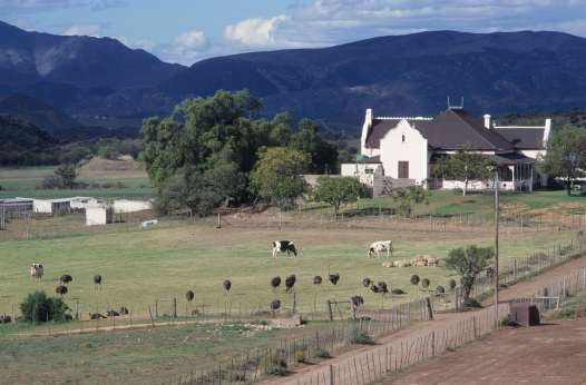 AFRIQUE du SUD Ferme avec autruches vers Outdtshoorn, dans le Karoo