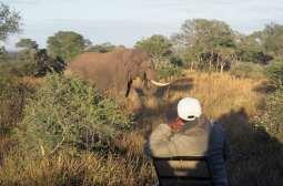AFRIQUE du SUD Safari dans une réserve privée