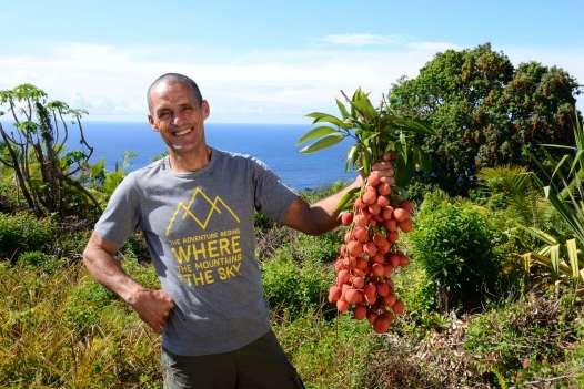 LA REUNION - St-Philippe Jean-Marc Huet, cultive un verger de pieds de letchis dans le Sud Sauvage, au milieu d'une plantation de palmistes.