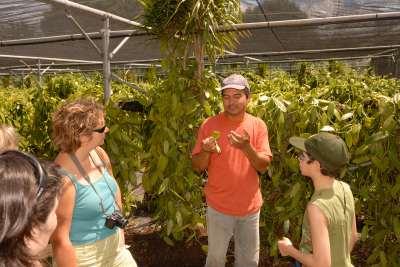 LA REUNION - St-André M. Roulof explique à un groupe de touriste la culture de la vanille sous ombrière