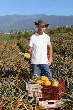 LA REUNION Cultivateur d'ananas Victoria
