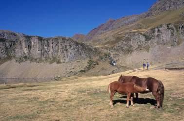 Vallée d'Ossau Chevaux vers le col d'Ayous