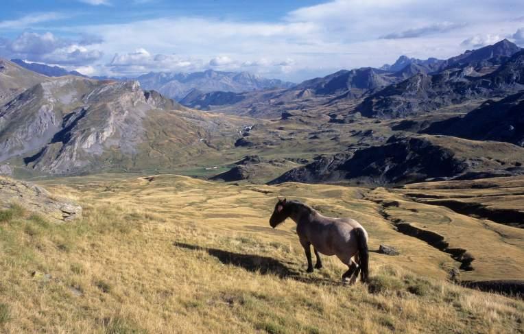 Vallée d'Ossau Cheval sauvage au cirque d'Anéou