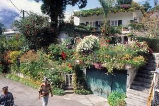 LA REUNION - Cilaos Jardin créole