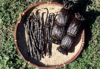 LA REUNION Gousses de vanille Bourbon