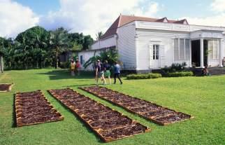 LA REUNION Maison de la vanille à St-André Séchage de la vanile