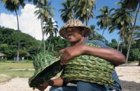 LA REPUBLIQUE DOMINICAINE Vendeur de chapeaux tressés au cayo Levantado (Samana)
