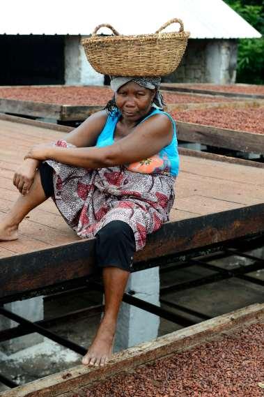 MADAGASCAR Ambanja, à la plantation Millot Au séchage des fèves de cacao