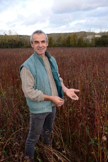 Bain-de-Bretagne Jean-Pierre Leroux, minotier, dans un champ de blé noir