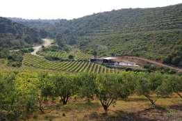 CROATIE - Ile de Vis Oliveraie et vigne, les deux cultures dominantes