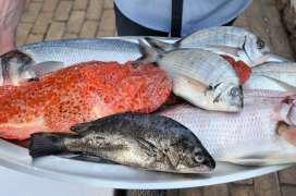 CROATIE - Ile de Vis Plateau de poissons servis à la Villa Kaliopa