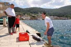 CROATIE - Ile de Vis Pêcheur écaillant un poisson sur le port de Komiza