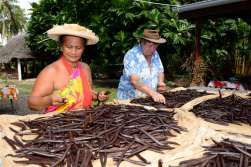 Polynésie Française Tahaa A la Vallée de la Vanille, Moeata et Bryan procédent au séchage de la vanille
