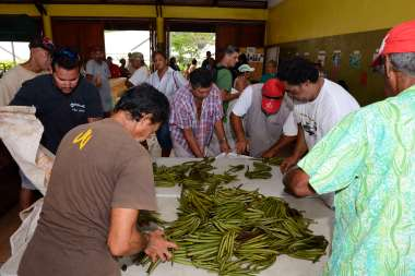 Polynésie Française Tahaa A la vente aux enchères de Huamene, contrôle des lots.